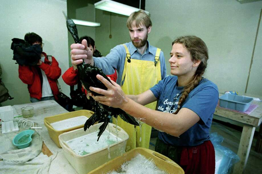 Troy Adamson, left, and Nicolette Heaphy clean a cormorant that had been covered in oil at the bird cleaning center in Valdez, Alaska, April 4, 1989.  Birds and other animals have been covered in oil as a result of the massive spill from the tanker Exxon Valdez that ran aground in Prince William Sound on March 24. Photo: ROB STAPLETON, ASSOCIATED PRESS / AP1989