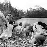 Exxon and federal officials surveying shorelines on Knight Island in Prince William Sound in Alaska say they are finding beaches that have recovered from the 1989 Exxon Valdez oil spill and others that still have oil just underneath the surface, May 15, 1991.
