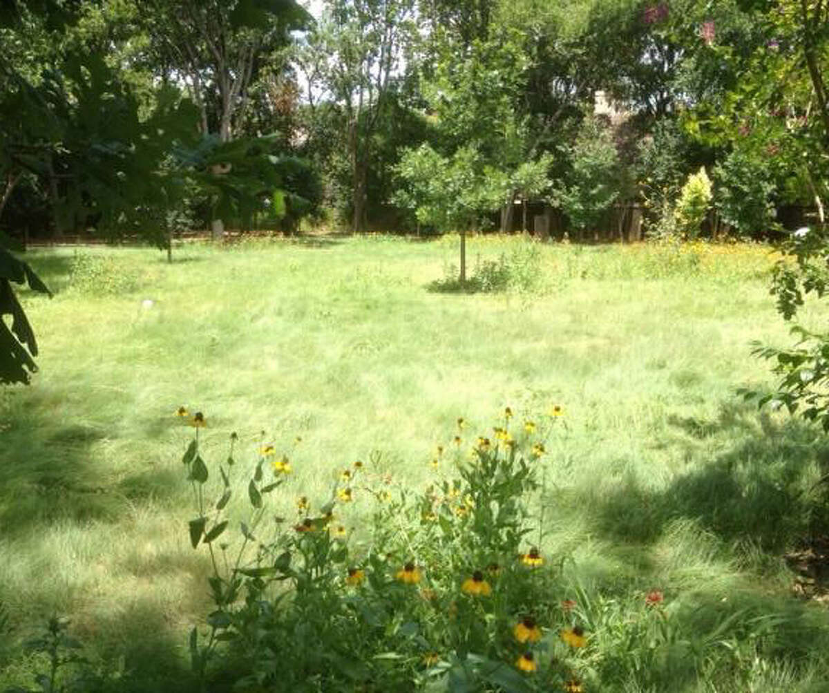 Habiturf, comprising prairie grasses, is a new option for lawns. It is drought tolerant once established.