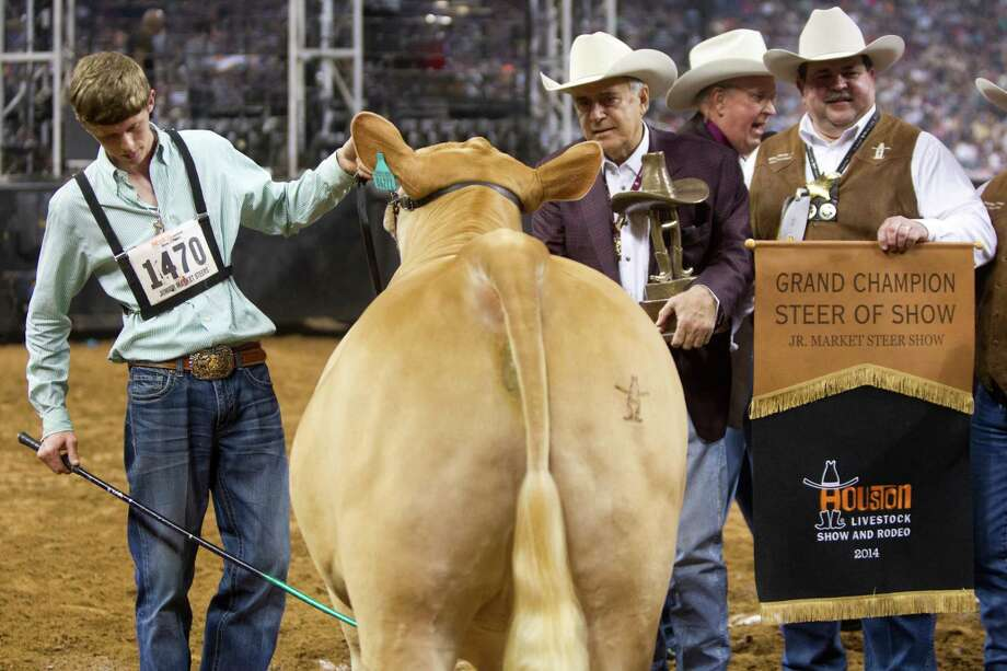 Flint Newman's 1,335-pound Charolais, G.O., receives the top prize at the Houston Livestock Show and Rodeo. Photo: Marie D. De Jesus, Houston Chronicle / © 2014 Houston Chronicle