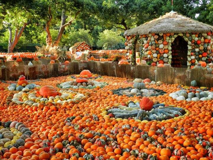 A fall pumpkin festival turns the dallas arboretum and - Botanic gardens pumpkin festival ...