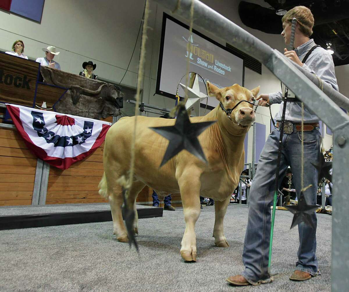 """Flint Newman, with his Grand Champion Steer named G.O. on Saturday at Reliant Arena, said he tried not to get attached to the animal, which will eventually go to slaughter. """"If you sell it for $400,000, you've got a lot of reasons not to."""""""