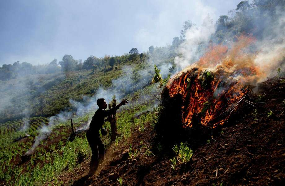 In this Jan. 30, 2014 photo, Taang rebels set fire to a poppy field close to Loi Chyaram village, a Taang self-governing area in northern Shan state, Myanmar. It's unclear whether the rebels troops who rely on the drug trade as their main source of income can or will do more than just wipe out a few fields here and there to placate villagers desperate over the toll drugs are taking. Photo: Gemunu Amarasinghe, AP / AP2014