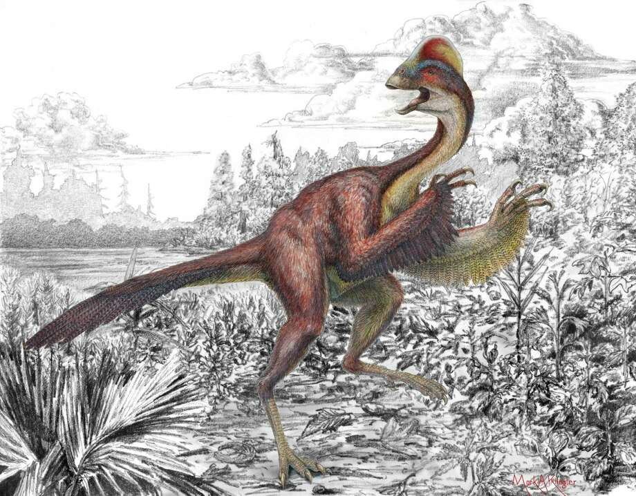 "This illustration provided by the Carnegie Museum of Natural History on March 18, 2014 shows the dinosaur Anzu wyliei. The birdlike animal, about 7 feet tall, weighed an estimated 500 pounds when it roamed western North America around 66-68 million years ago. Nicknamed the ""chicken from hell,"" the creature was formally introduced with an official name to the scientific community Wednesday, March 19, 2104 as scientists published a description and analysis of its anatomy. Photo: Mark Klingler, AP / AP2014"