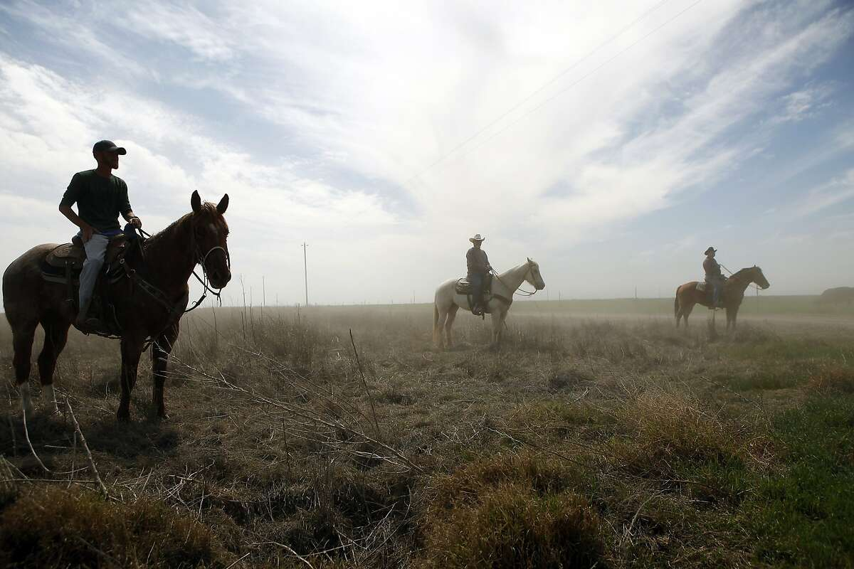 (L-R)Beau Clark, his dad Mike Clark and Larry Curtsinger sit on their horses and watch as cattle move from one pasture to another on Jack Mitchell's ranch in Alpaugh, CA, Thursday, March 20, 2014. Farmer Jack Mitchell has sold about 2000 acres of his ranch to the Atwell Island Sanctuary which, through the Bureau of Land Management, is turning former farm land in the San Joaquin Valley back to it's natural pre-agriculture state.