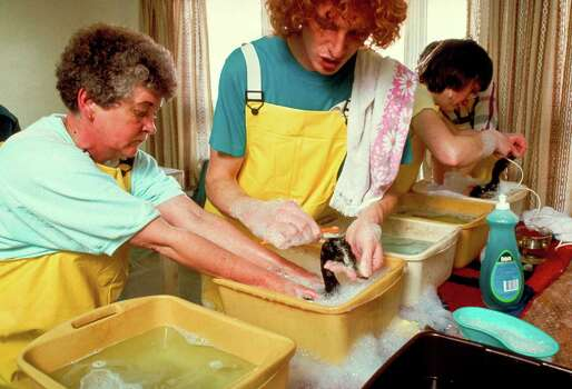 Volunteers bathing birds fouled by Exxon Valdez oil spill with dish detergent among household products being used in clean-up. Photo: Alan Levenson, Time & Life Pictures/Getty Image / Alan Levenson