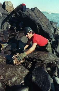 Rick Zufelt of Soldotna, Alaska, wipes spilled crude oil off a rock on the beach of Naked Island on Prince William Sound, Alaska, Friday morning, April 7, 1989, in an effort to clean the remnants of the Exxon Valdez tanker disaster of March 24.  Zufelt, who works for a company contracted by Exxon to clean up the oil, is using a special oil absorbent rag. Photo: JOHN GAPS III, ASSOCIATED PRESS / AP1989