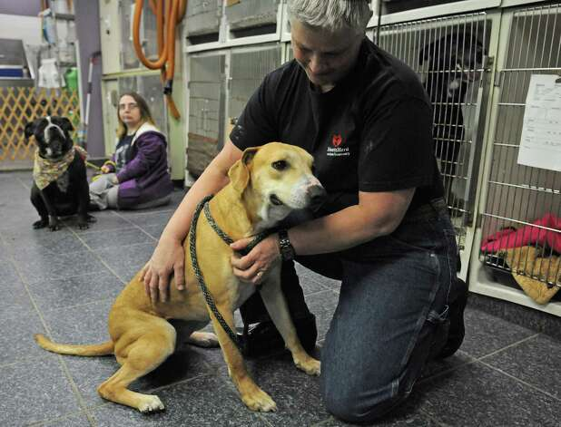 Time With Dogs Is The Just Right Therapy Times Union