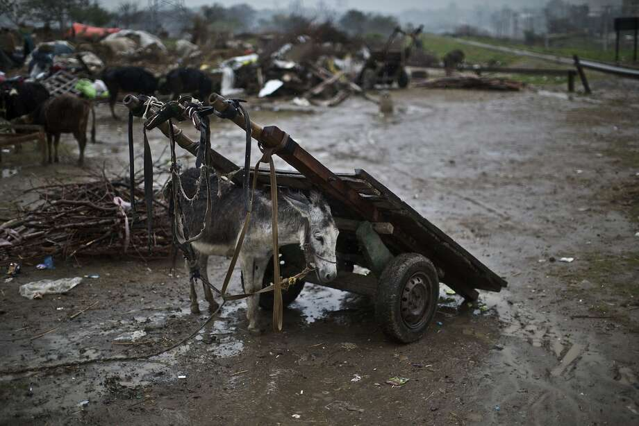 Mud and misery: A donkey belonging to an Afghan refugee family shelters itself from the rain under a wooden cart on the outskirts of Islamabad. Authorities bulldozed the family's illegal mud house, which was constructed without running water or sewage disposal. Photo: Muhammed Muheisen, Associated Press