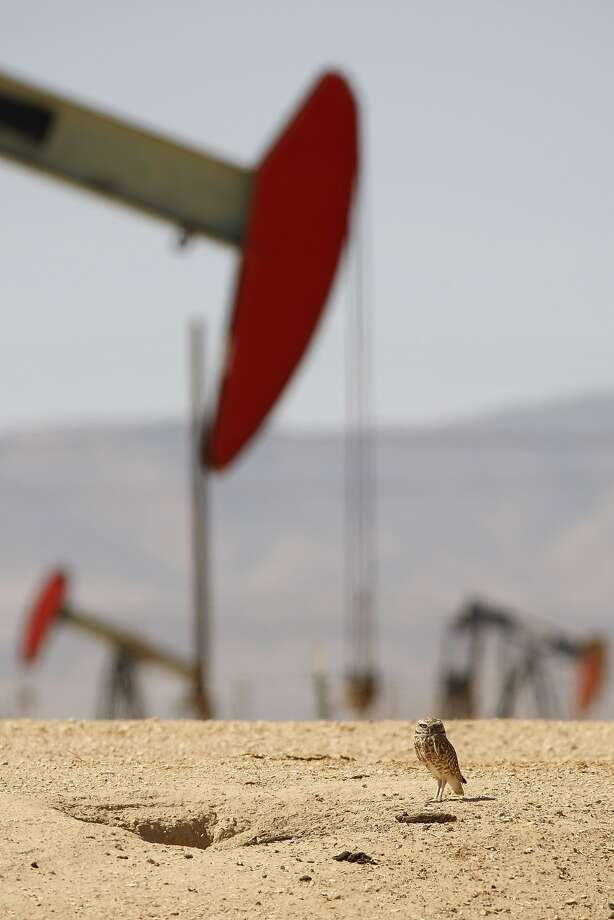 WE'VE STRUCK OWL!Pistoning pump jacks bob behind a burrowing owl's home in an oil field over the Monterey Shale formation in Lost Hills, Calif. The Lost Hills operation uses hydraulic fracturing, or fracking, to extract oil and gas. Photo: David McNew, Getty Images