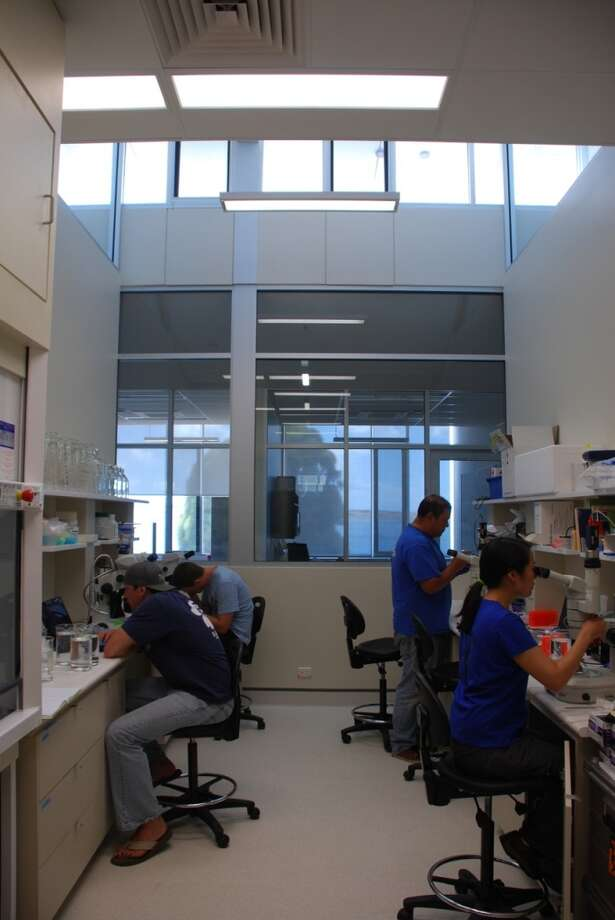 Stanford and National Oceanic and Atmospheric Administration scientists examine microscopic fish larvae at the Lincoln Marine Science Centre in South Australia.