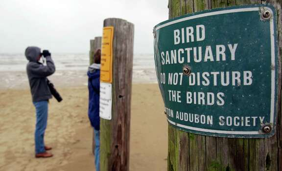 Houston Audubon Society members Mary Anne Weber, left, and Winnie Burkett watch for oiled birds at the Bolivar Flats Shorebird Sanctuary Monday, March 24, 2014 in Bolivar. Photo: Melissa Phillip, Houston Chronicle / © 2014  Houston Chronicle