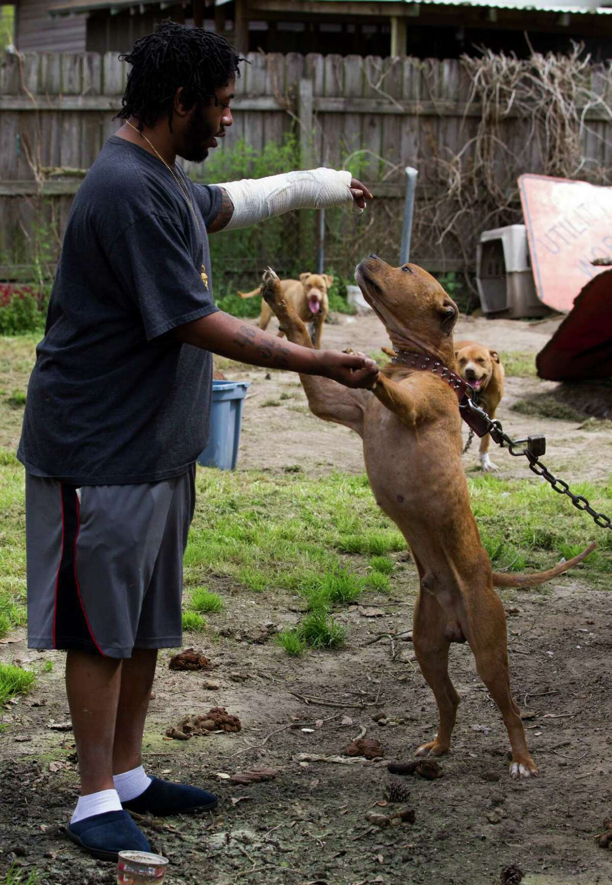 Neighbors have complained over the number of dogs Jeffery Harold Jr. has owned.