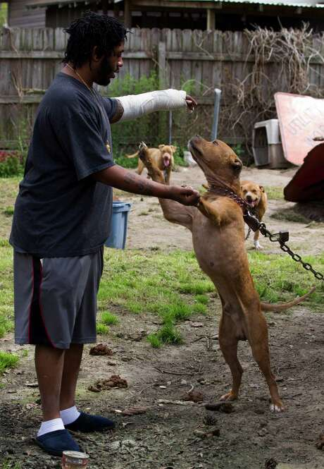 Neighbors have complained over the number of dogs Jeffery Harold Jr. has owned. Photo: J. Patric Schneider, Freelance / © 2014 Houston Chronicle
