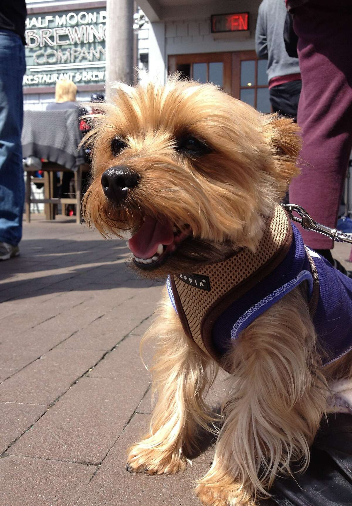 """The Half Moon Bay Brewing Co. has been named """"Most Dog-Friendly"""" restaurant for three years in a row in Bay Woof magazine's """"Beast of the Bay"""" competition."""