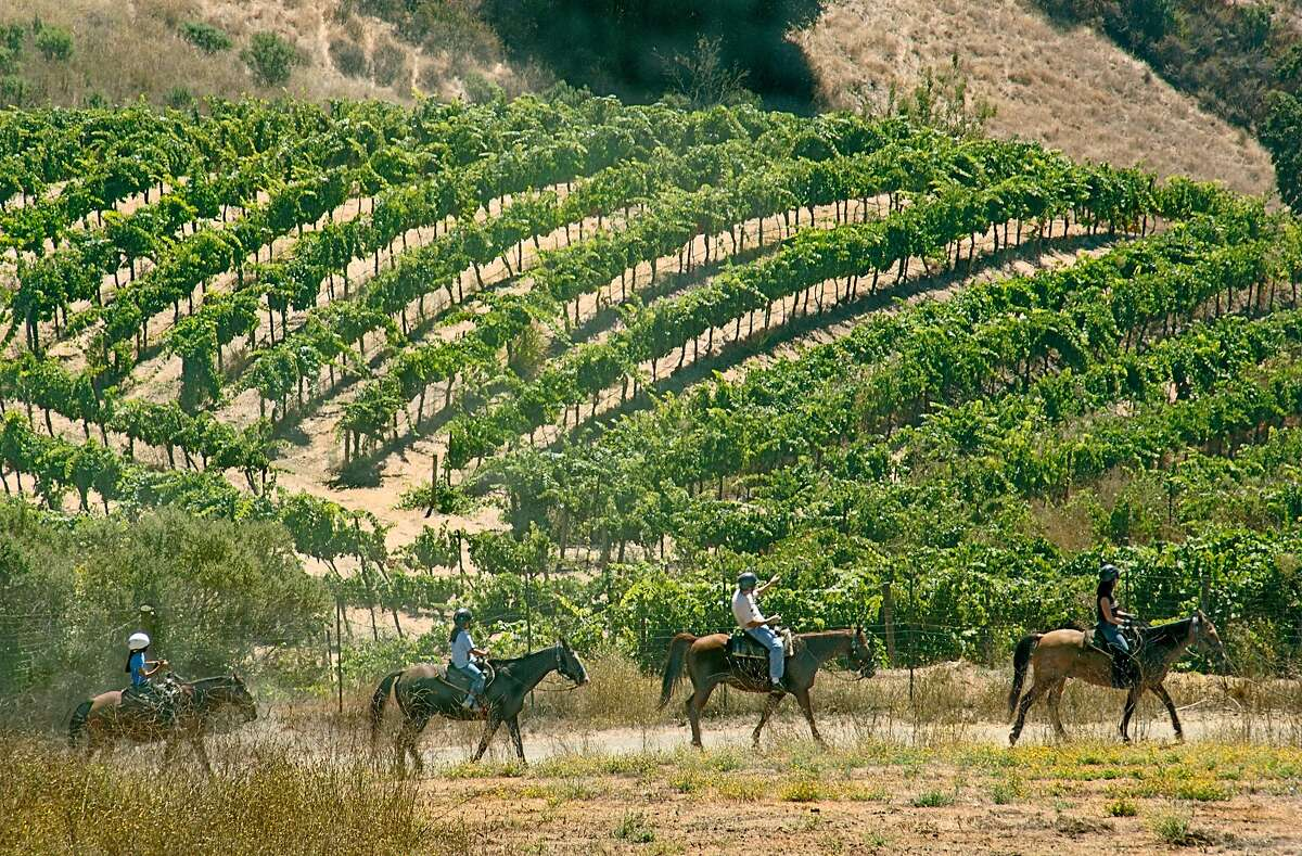 Horseback riding through the vineyards at Cooper-Garrod Farms in the foothills above Saratoga.