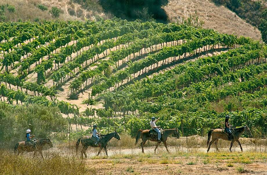 Garrod Farms offers hour-long horseback rides through the vineyards, with sweeping views of the South Bay and a tasting room for picnic lunches. Photo: Ralph Andrea Photography, Cooper-Garrod Farms