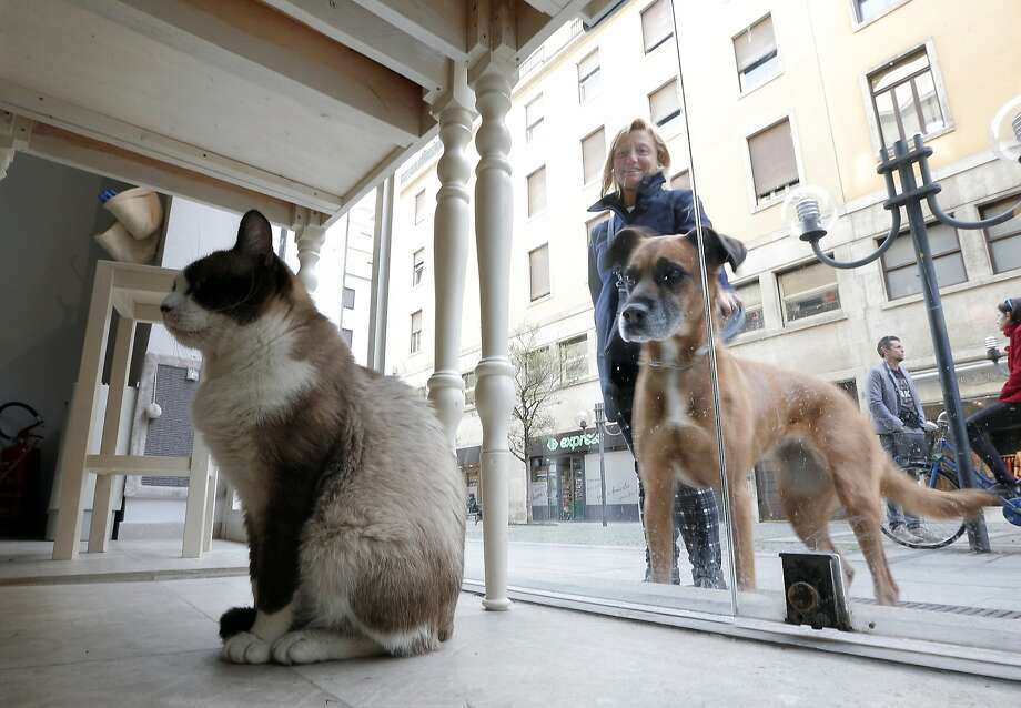 Sorry, your kind's not welcome here: The Miagola Cafe in Turin, Italy, does not serve dogs - just people and cats. Photo: Marco Bertorello, AFP/Getty Images