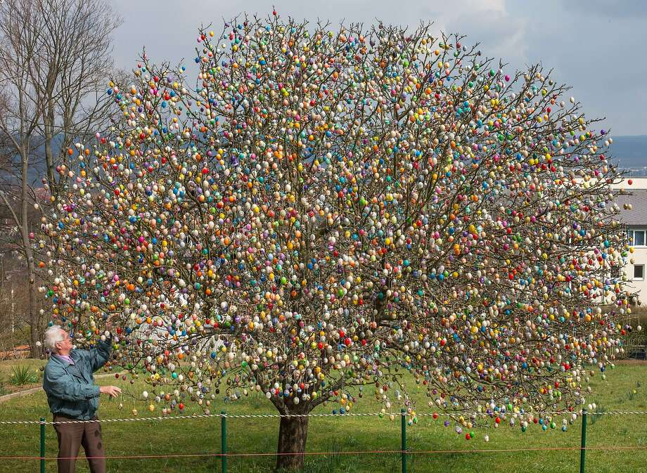 A man of many eggs: In an  annual pre-Easter tradition, Volker Kraft of Saalfeld, Germany, decorates his apple tree  with more than 10,000 Easter eggs. Photo: Michael Reichel, AFP/Getty Images