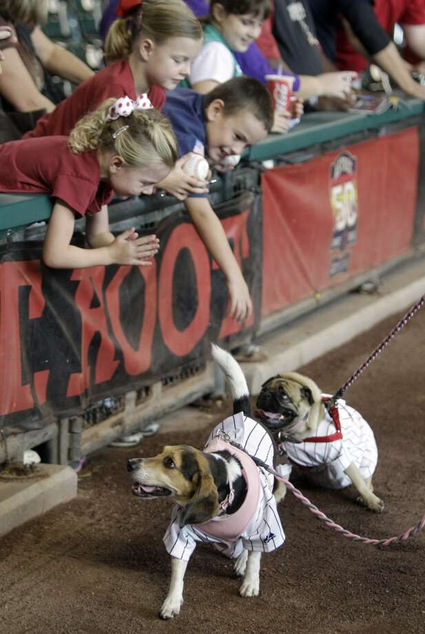 Dog Day at Minute Maid  Bring your dog to Minute Maid Park to watch the game and enjoy the Pooch Parade around the warning track. | More Information Date: Sunday, April 27 Opponent: Oakland Athletics Photo: Melissa Phillip, Houston Chronicle