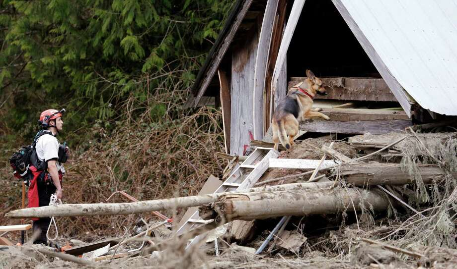 Volunteer searcher Shayne Barco directs his dog Stratus into a structure destroyed in a deadly mudslide Tuesday in Oso. The 1-square-mile slide that hit in a rural area about 55 miles northeast of Seattle on Saturday. .  Photo: Elaine Thompson, Associated Press / AP2014