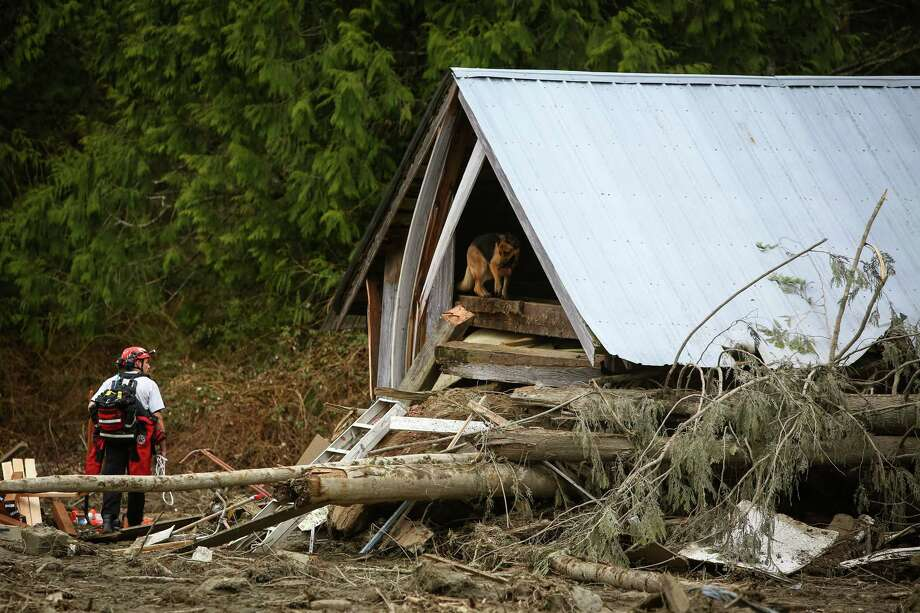 A dog searches the remains of a building near Oso, Wash. Photo: JOSHUA TRUJILLO, SEATTLEPI.COM / SEATTLEPI.COM