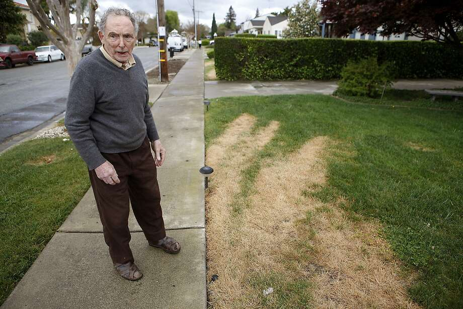 Greg Riggs shows the damage to his lawn in San Jose, where vandals appear to be spraying herbicide. Photo: Michael Short, The Chronicle