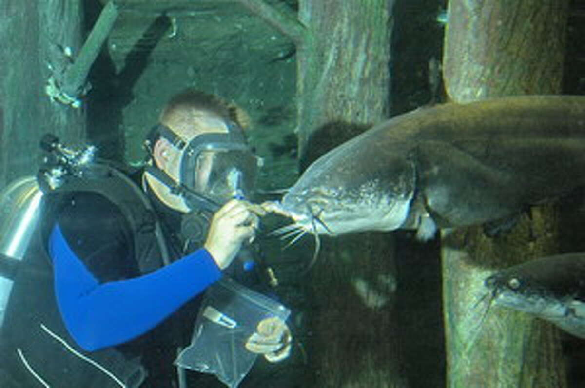 A TPWD diver hand feeds fish during the daily shows at the TFFC theater aquarium.