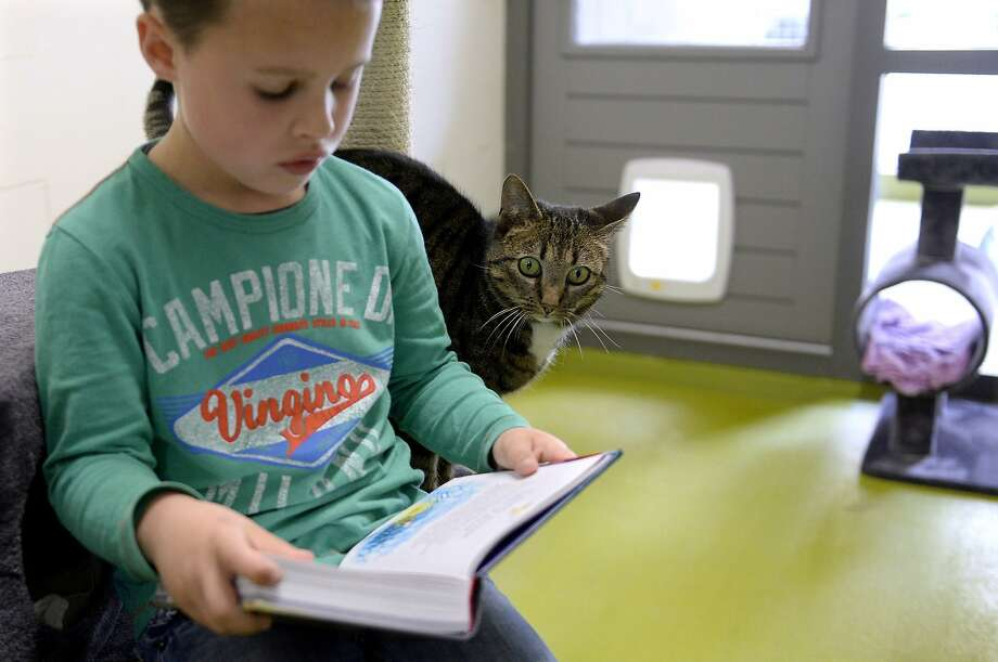 'And then they took the tabby to get spayed ...' A girl reads aloud to a cat at an animal shelter in Amersfoort, Netherlands. Photo: Marco De Swart, AFP/Getty Images