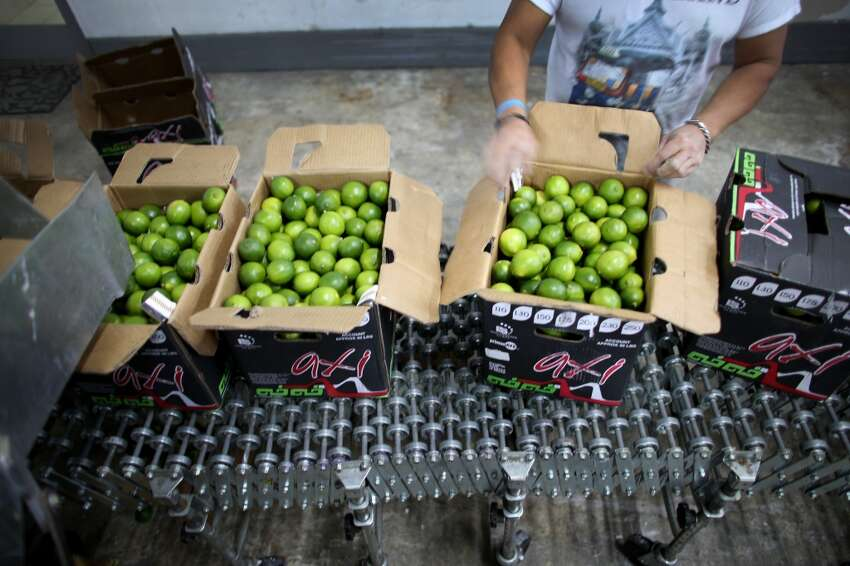 Wholesalers and restaurants are combating the prices that have more than doubled during the last month by offering less limes. Click ahead to see how the shortage will likely affect Alamo City restaurants.