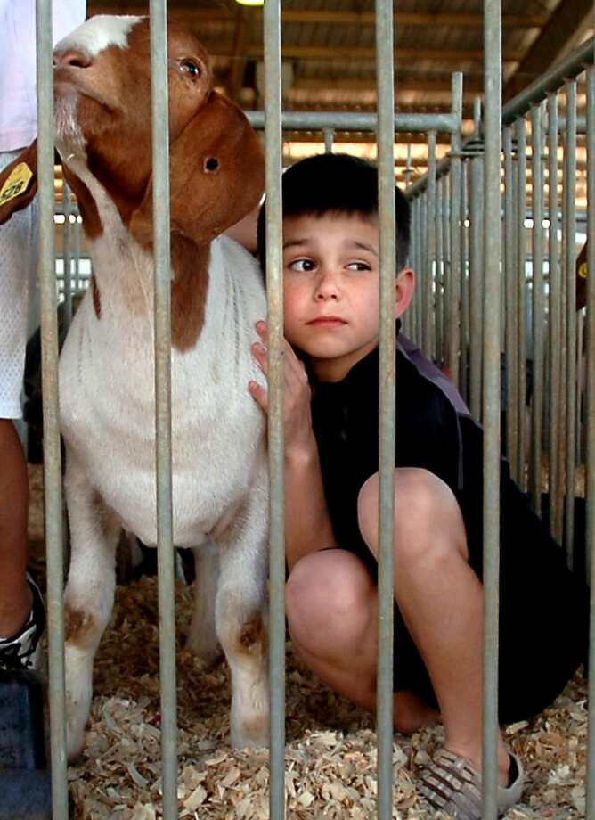 Ethan Logsdon hugs one of his goats during the South Texas State Fair at Ford Park in Beaumont, Wednesday. Tammy McKinley/The Enterprise