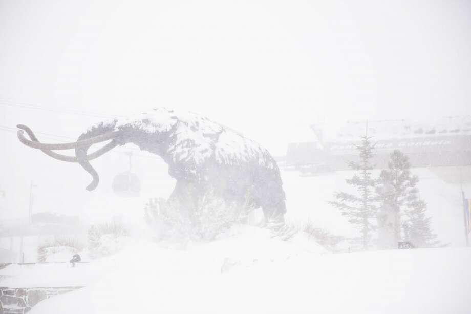 Mammoth: buried alive