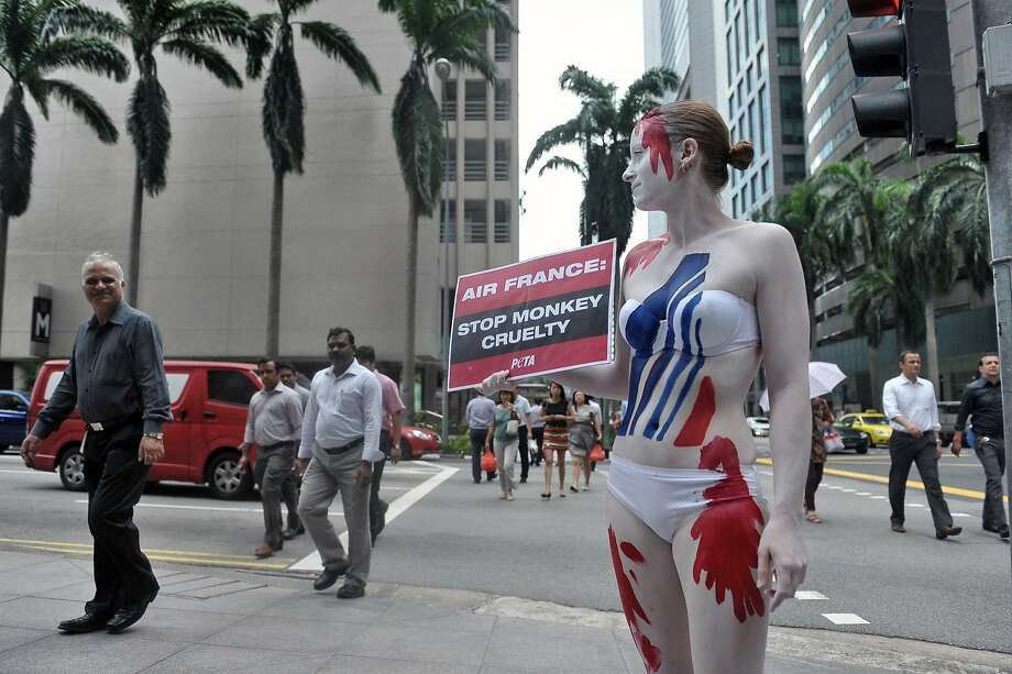 Air France accused of monkey cruelty:A PETA protester painted to resemble a bloodied Air   France logo protests outside the airline's   offices in Singapore. PETA alleges Air France is one of only a few major carriers   that still transport monkeys for use in lab experiments. Air France defended its transport   of live animals for laboratory testing, saying it complies fully with international   regulations. Photo: Mohd Fyrol, AFP/Getty Images