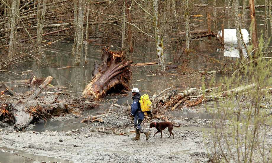 A searcher and dog walk past debris and standing water at the scene of a deadly mudslide on Thursday in Oso. Photo: Mark Mulligan, Associated Press / AP2014