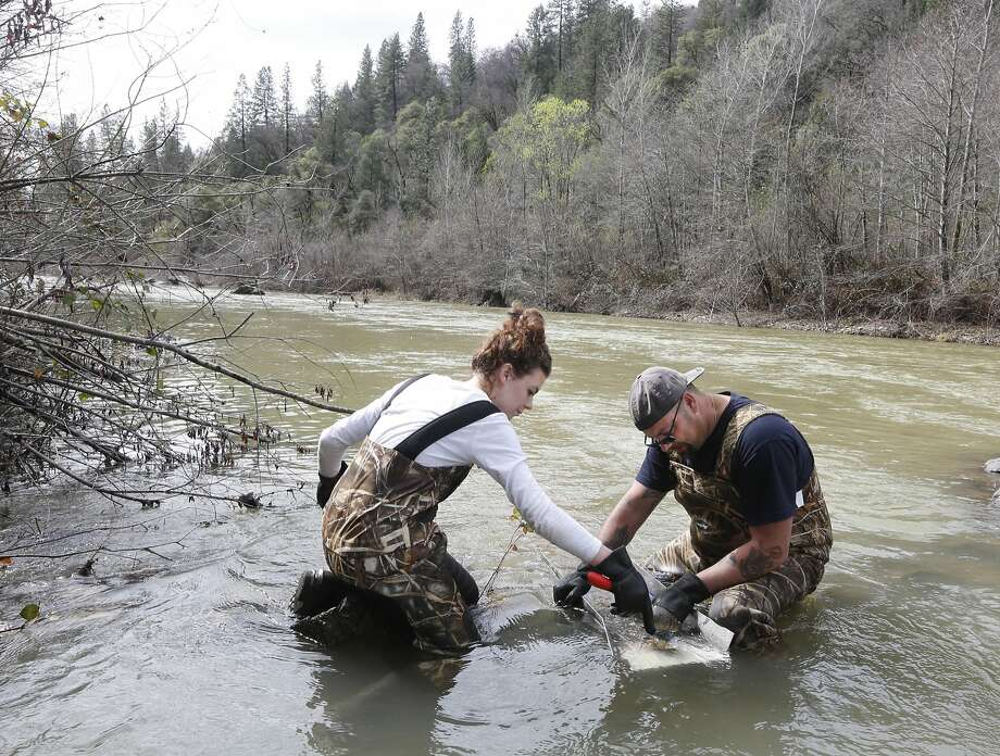 Tim Amavisca, 38, and daughter Hailey, 15, use a sluice box to trap gold flakes on a textured rubber mat as they search for gold along the Bear River near Colfax. Photo: Rich Pedroncelli, Associated Press