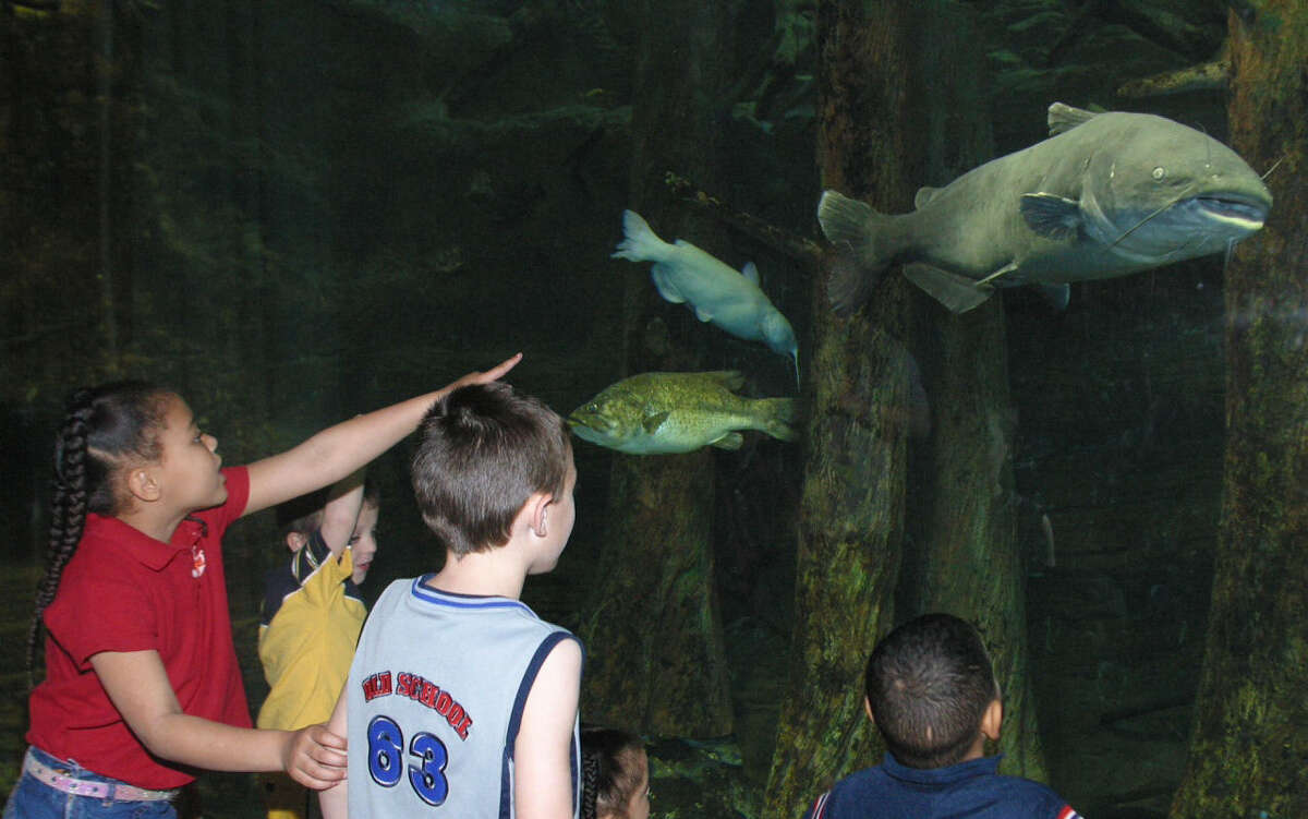 Student visitors to the Texas Freshwater Fisheries Center are fascinated by the show conducted in the huge theater aquarium. More than 20 fish species are hand-fed by divers during a question-and-answer session between the diver and audience.