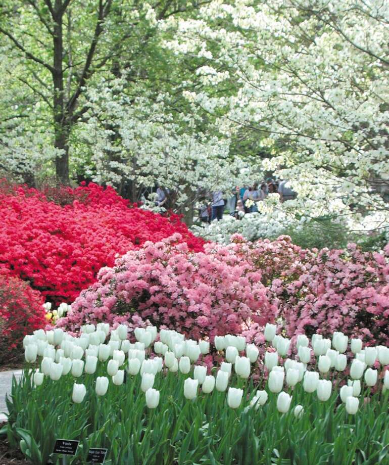 Spring brings layers of blooms to the Dallas Arboretum and Botanical Garden. Photo: Courtesy Photo, Dallas Arboretum And Botanical Garden