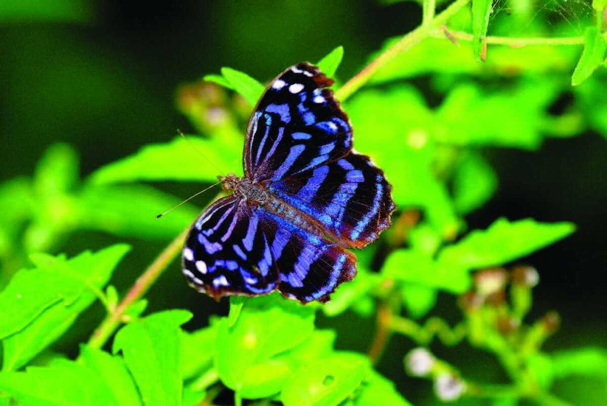 Butterflies of all hues frequent the National Butterfly Center in Mission.