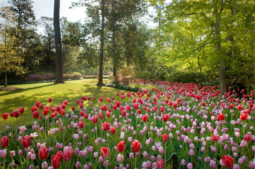Old Fashioned Gardens Surround The Bayou Bend Mansion And Museum Photo