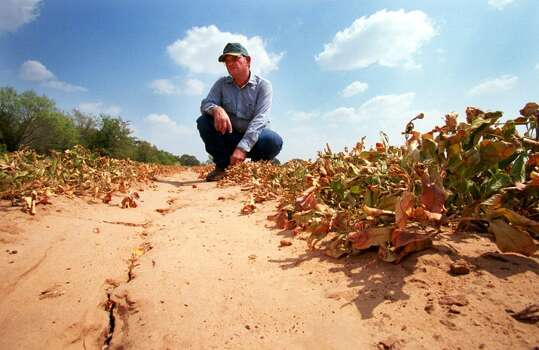 Glen Armstrong examines his dead peanut plants September 7, 2000 in Dublin, Texas where a drought has made his crop unharvestable. Armstrong said he has lived his whole life in Dublin and has never seen conditions as bad as they are now. The farmers across Texas are in dire straits as the state enters its 68th consecutive day without rain. The cracking soil is hard as a rock and unfit for planting in most areas. (Photo by Joe Raedle/Newsmakers) Photo: Joe Raedle, Getty Images