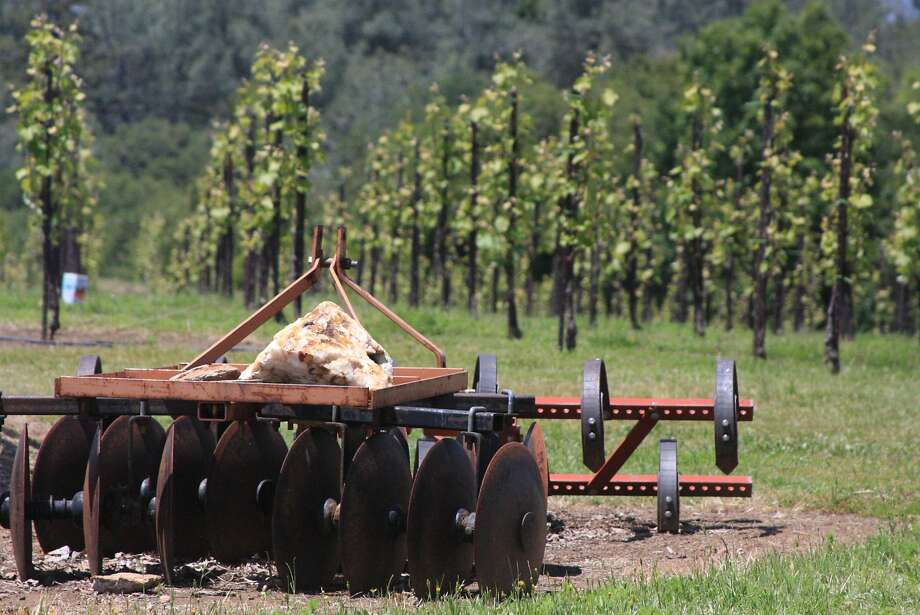 The Swansboro vineyard near Placerville in the Sierra foothills sports Grenache Blanc, which has doubled its acreage in California in less than a decade. Albarino is also finding new footing. Photo: Jon Bonne