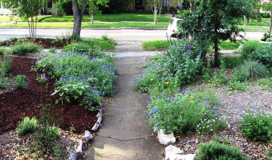 In Joan Miller's Monte Vista yard, bluebonnets bloom alongside other native plants. Photo: Photo Courtesy Joan Miller