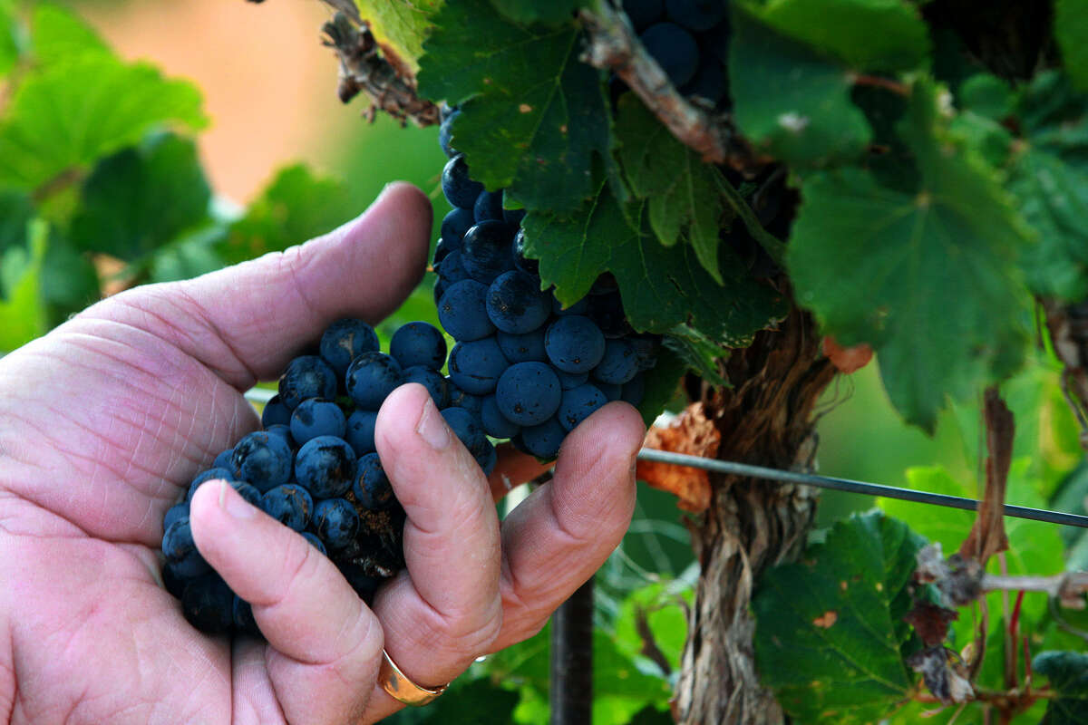 Take a tour of Texas wineries. You can design your own wine tour, whether large or small, from several wineries around Texas. Click through the gallery guide to view listings and images from the beautiful Texas Hill Country.