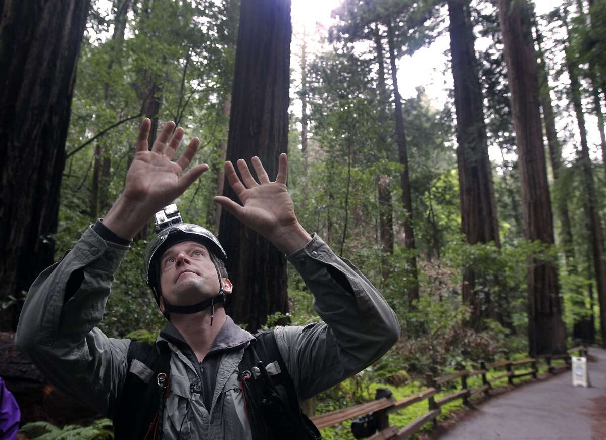 Lead researcher Stephen Sillett looks up at the canopy before ascending a 250-foot redwood in the Cathedral Grove at Muir Woods National Monument on Friday, March 28, 2014. The project is part of BioBlitz, a 24-hour environmental program with conservation groups and scientists from around the Bay Area and the country converging on the Golden Gate National Recreation Area to study a variety of issues.
