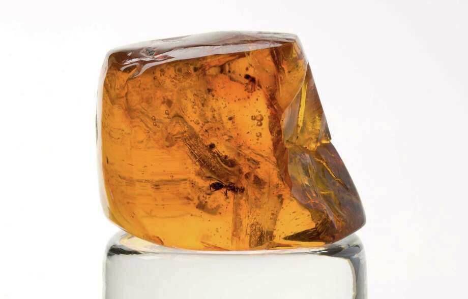 This piece of amber from the Dominican Republic was the final resting place for a winged ant - about 15 million years ago. It is part of the Bruce Museum's collection. Photo: Contributed Photo / Greenwich Time Contributed