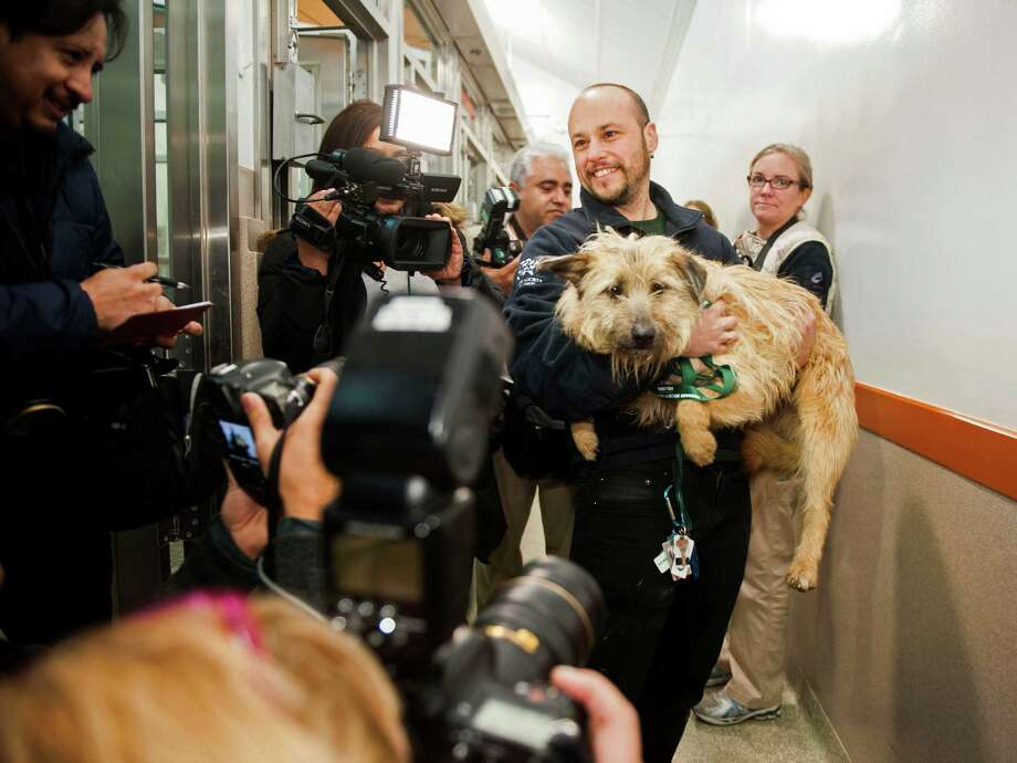 Members of the media surround Adam Parascandola of Humane Society International and Kuzya, a dog rescued from Sochi, Russia, as she arrives at the Washington Animal Rescue League in Washington on Thursday, March 27, 2014. Humane Society International worked with the PovoDog Animal Shelter in Sochi, site of the 2014 Winter Olympics, to transport and place the dogs from the city streets to the United States. Photo: Kevin Wolf, Associated Press / AP Images