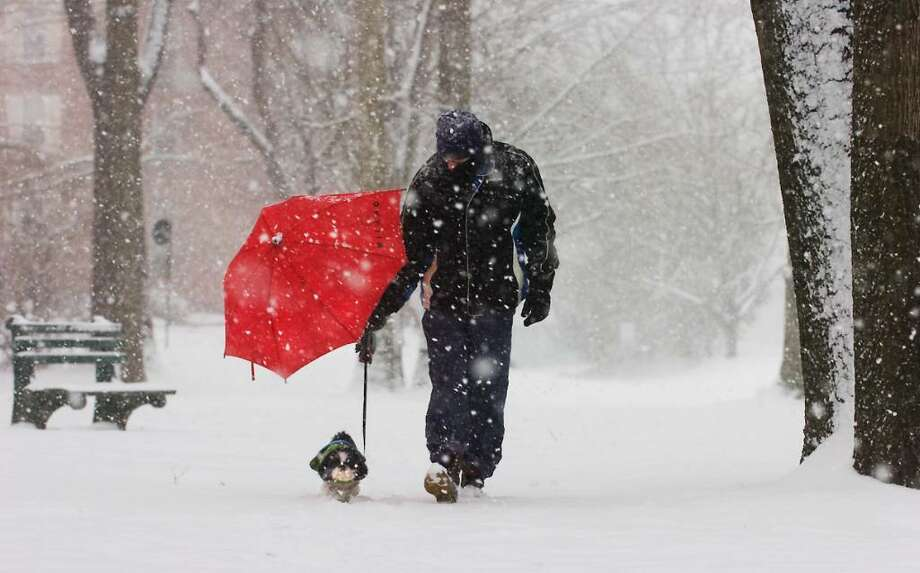 Steve Brooks walks his dog Lola protecting her with an umbrella along Washington Blvd. in blizzard conditions in Stamford , Conn. on Wednesday, Feb. 10, 2010. Photo: Kathleen O'Rourke / Stamford Advocate