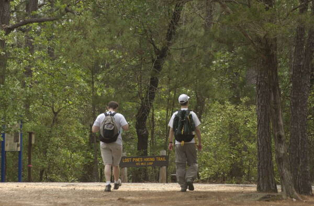 10. Bastrop State Park: The lost pines of Bastrop are the most southwestern stand of loblolly pines in the United States.