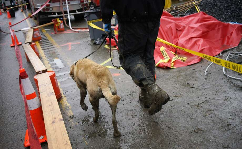Nexus the rescue dog is walked to the decontamination area after searching for victims of a mudslide in Oso, Washington March 30, 2014. Local churches offered prayers on Sunday for the victims of last week's devastating mudslide in Washington state and words of solace for grieving families and friends, many of whom are still waiting for news of missing loved ones. REUTERS/Rick Wilking (UNITED STATES - Tags: DISASTER ENVIRONMENT ANIMALS) Photo: Rick Wilking, Reuters