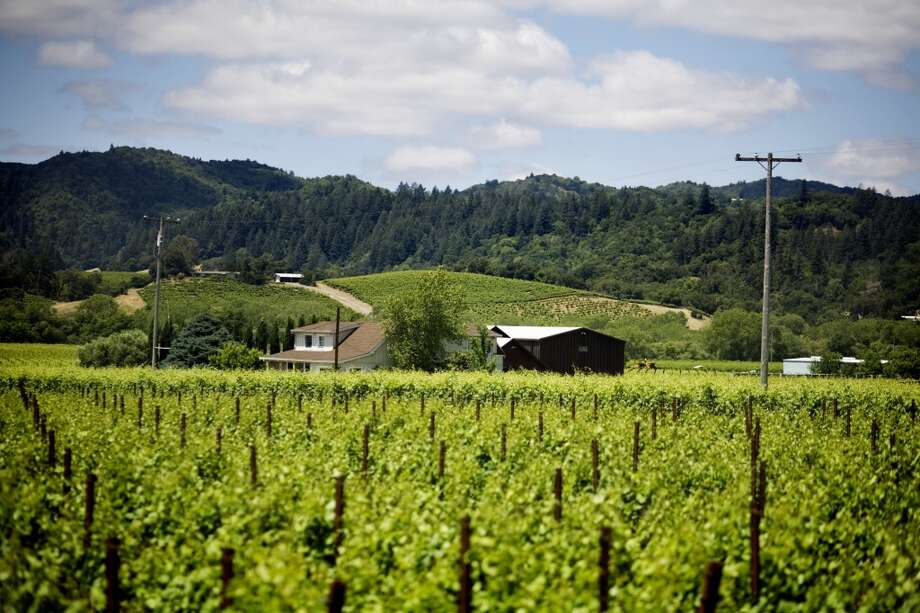 Dry Creek Valley is situated between the Alexander Valley and the Russian River Valley. The area is known for Zinfandel as well Cabernet Sauvignon, Sauvignon Blanc and Merlot. Photo: Lianne Milton, Special To The Chronicle